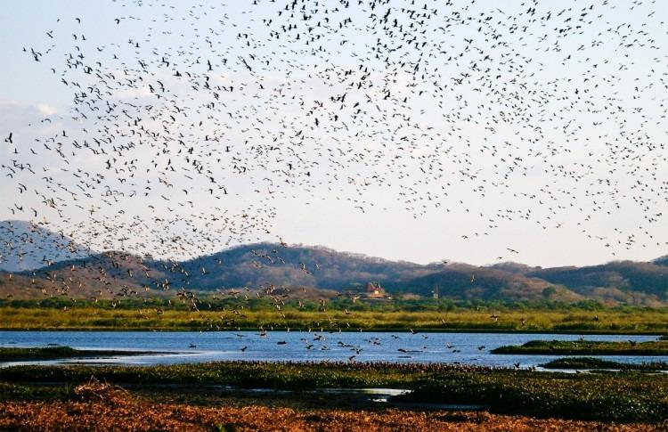 Imagen de cientos de aves volando sobre el humedal.