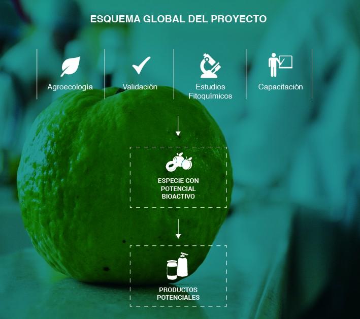 infografía guayaba