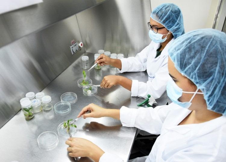 Dos investigadoras en el laboratorio con unas plantas.