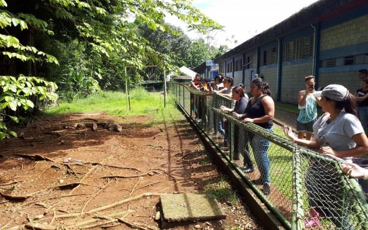 En el TEC de San Carlos el público puede visitar la zona donde están los cocodrilos y aprender sobre los mismos. (Foto cortesía Olivier Castro)