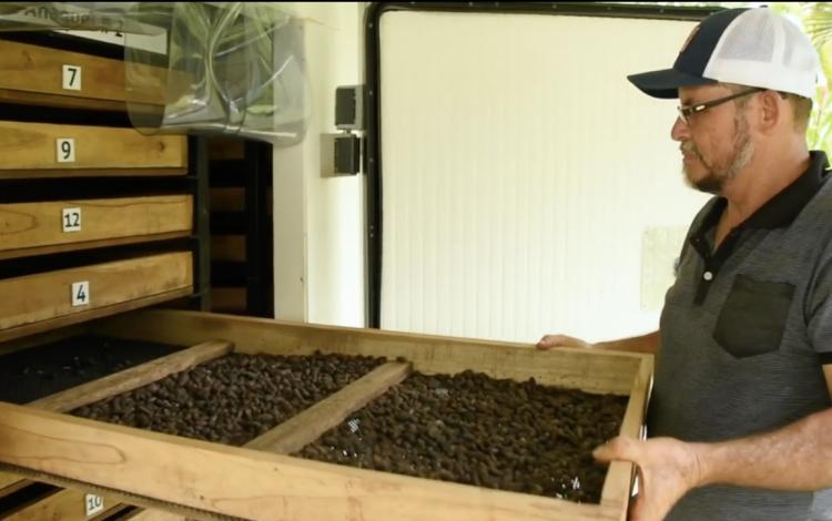 Imagen de un hombre realizando el  proceso del secado del cacao.