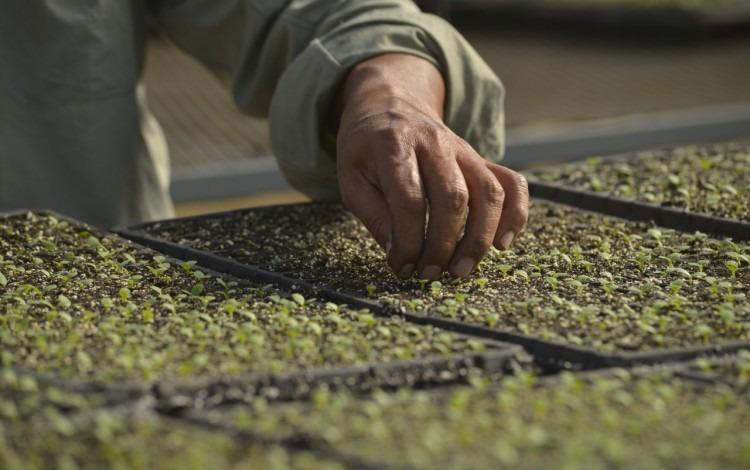Imagen de una mano en una plantación
