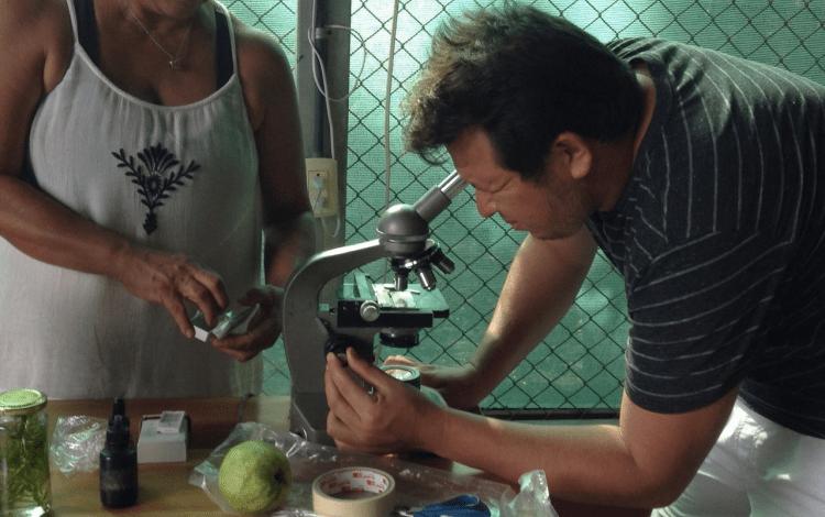 Productores analizan una muestra en un microscopio.