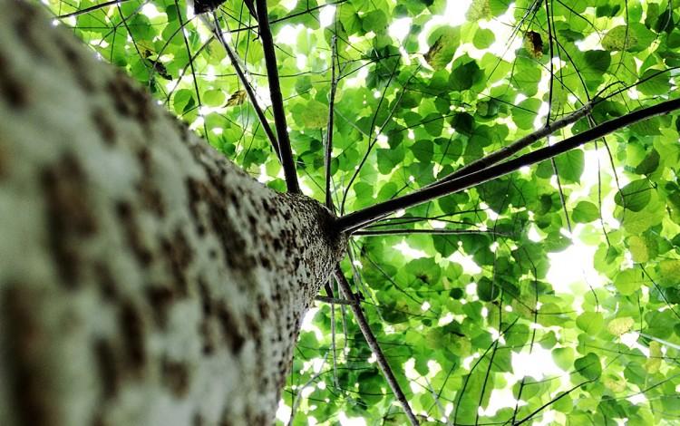 Imagen de un árbol desde la base.