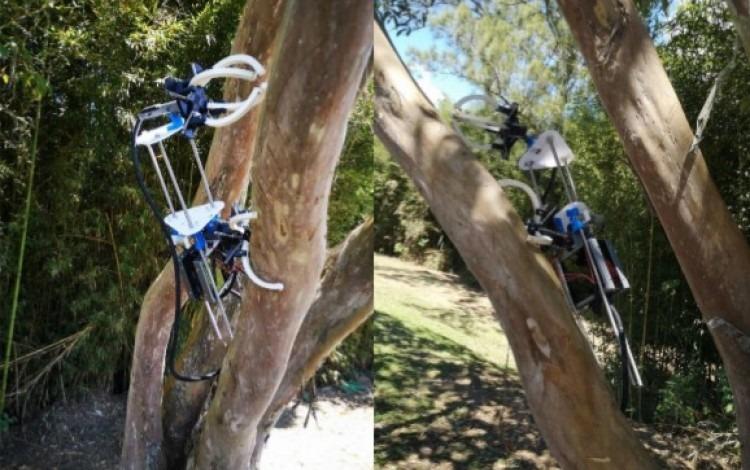 Robot escalando un árbol curvo
