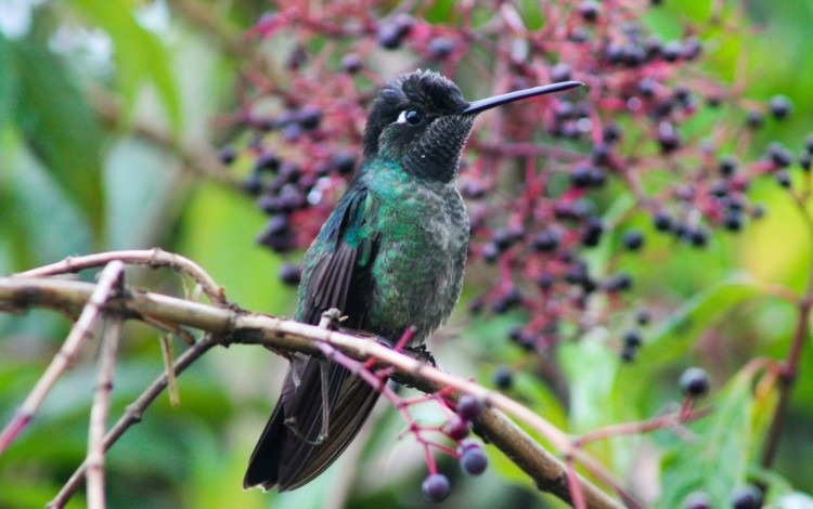 colibri en árbol