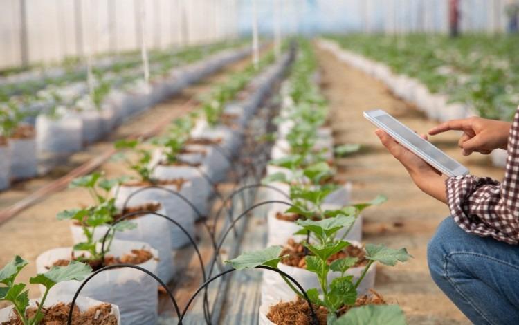 persona con tablet tomando datos y análisis de plantas en invernadero
