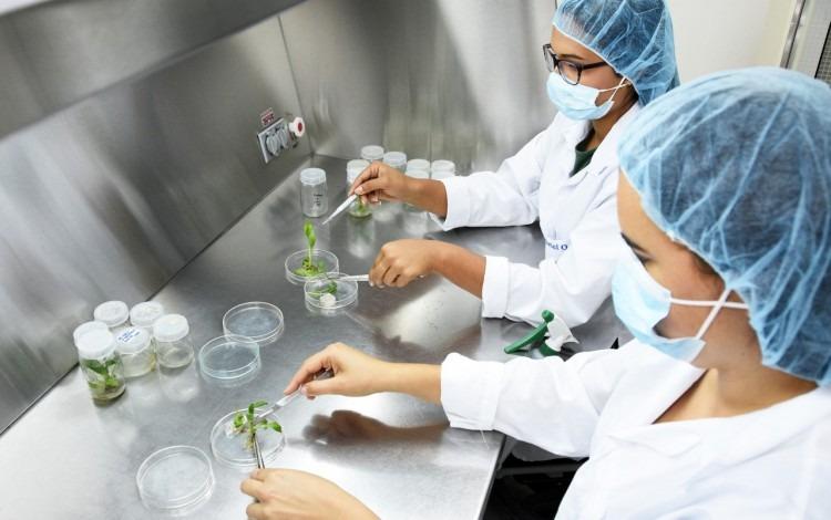 Dos mujeres en el laboratorio analizan muestras de plantas.
