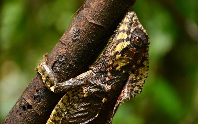 Un reptil agarrado de una rama.