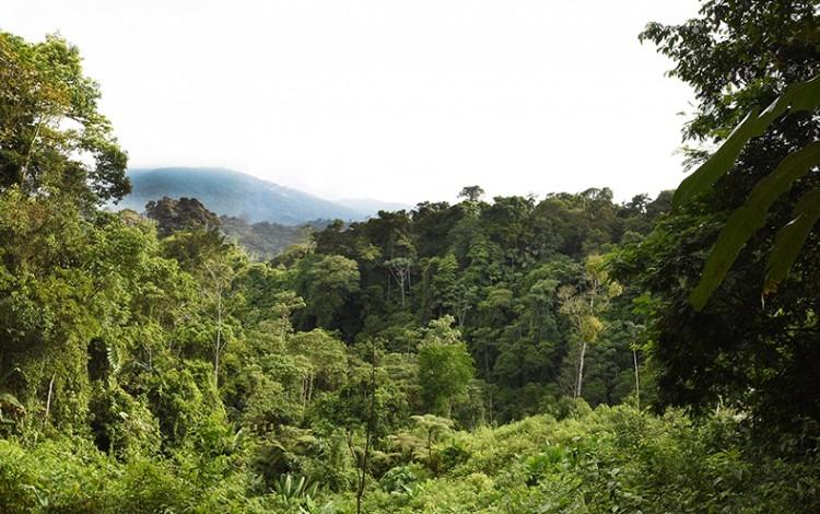 Paisaje boscoso de Talamanca.