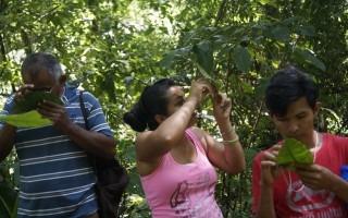 Práctica de campo en la identificación de especies arbóreas en el bosque.