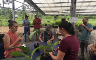 imagen de varias personas estudiando la genética de las plantas