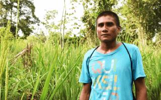 Ballarino Oniel, indígena bribri de Shuabb de Talamanca, muestra su sembradío de arroz orgánico. Ese campo fue cosechado en la tercera semana de setiembre. (Foto: Ruth Garita/OCM).