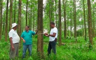 tres personas en bosque realizando mediciones a los árboles