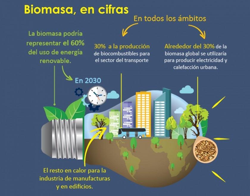Infografía: Biomasa, en cifras