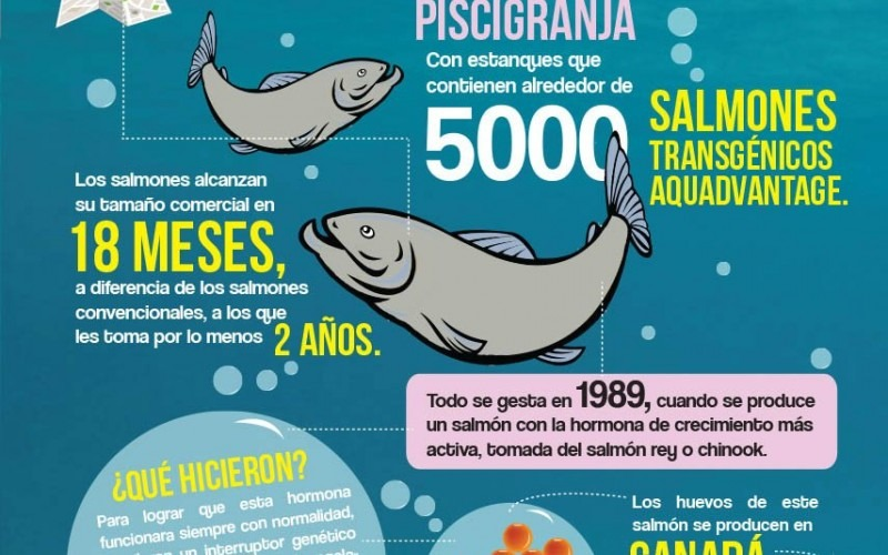 ¿Cómo se origina el salmón AquAdvantage?