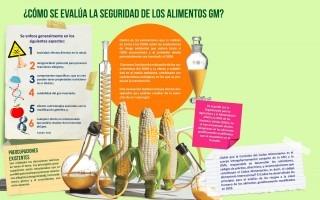 Evaluación de la seguridad de los alimentos OGM
