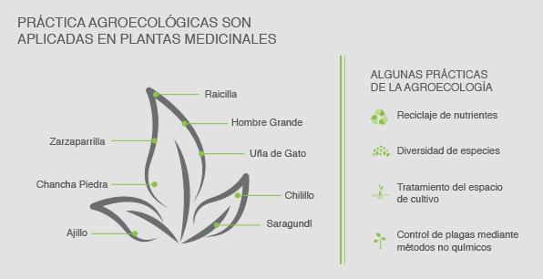 Plantas medicinales estudiadas para el manejo agroecológico
