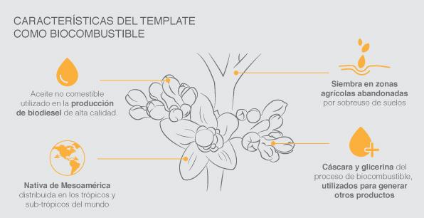 Características del tempate como biocombustible
