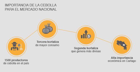 Importancia de la cebolla para el mercado nacional