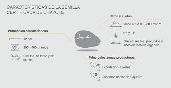 Características de la semilla certificada del chayote.