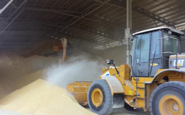 Trabajadores expuestos al polvo de granos son más propensos a desarrollar problemas respiratorios y alergias