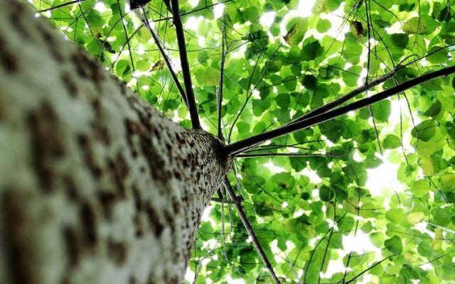 ¿Qué es la dendroenergía? La oportunidad para consolidar una nueva fuente de energía renovable