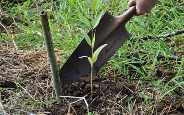En el Día del Árbol, TEC sigue contribuyendo con la carbono neutralidad