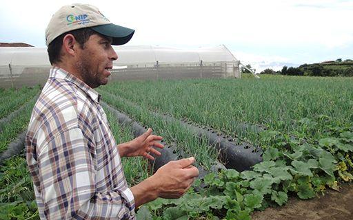 Un agricultor en una plantación.