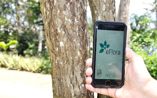 The eFlora application open on a cell phone.