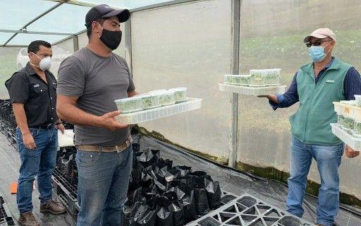 Agricultor con las plantas en la mano.