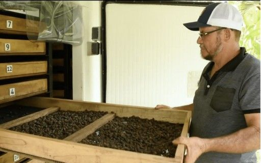 A producer checks the cocoa in the drying chamber.