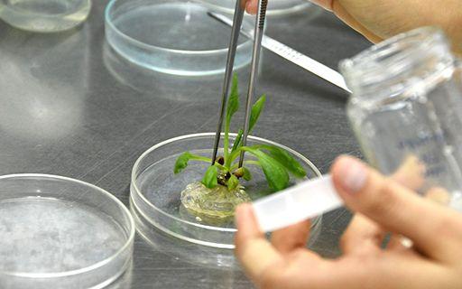 Una planta pequeña es estudiada en el laboratorio.