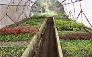 Huerto con diferentes plantas