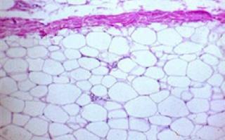 Células en microscopio