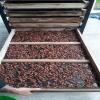 Resultados del secado de cacao por medio del sistema térmico solar híbrido forzado instalado en la Fábrica Artesanal Chocolates Fusión.
